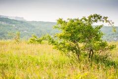 Einsamer Busch Stockbild
