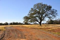 Einsamer Eichen-Baum in Kalifornien Stockfotografie