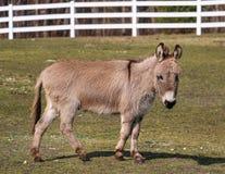 Einsamer Esel Stockfoto