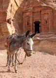 Einsamer Esel nahe den Ruinen Stockfotos