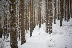 Einsamer Fußweg im Wald im Winter Lizenzfreie Stockfotos