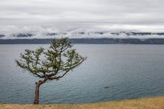Einsamer gebogener Koniferenbaum mit farbigen Bändern auf der Küste von Olkhon-Insel nahe dem Baikalsee auf einem Gebirgshintergr stockfotos