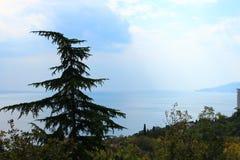 einsamer gekrümmter Baum gegen den Himmel Stockbild