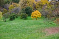 Einsamer gelber Baum Lizenzfreies Stockbild
