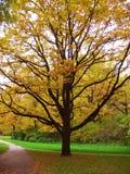 Einsamer gelber Baum. Autumn Landscape Lizenzfreies Stockfoto