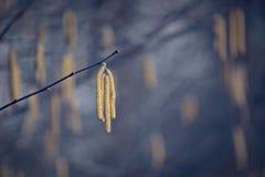Einsamer gelber Samen auf Winterniederlassung im kahlen Ambiente Stockfotografie