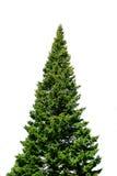 Einsamer gezierter Baum auf Weiß Lizenzfreies Stockfoto