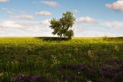 Einsamer grüner Baum auf dem Gebiet lizenzfreie stockbilder