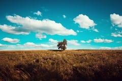 Einsamer grüner Baum auf dem Gebiet beim Weinlesetonen lizenzfreies stockfoto