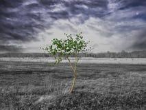Einsamer grüner Baum auf dem gebrannten leblosen Feld lizenzfreie stockfotos