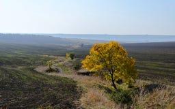 Einsamer grüner Baum in der gepflogenen Erde Lizenzfreie Stockfotos