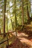 Einsamer Herbst Stockfotografie