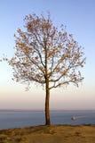 Einsamer Herbstbaum Stockfotos