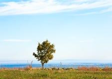 Einsamer Herbstbaum auf Feld Stockfoto