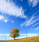 Einsamer Herbstbaum auf Himmelhintergrund. Stockfotos
