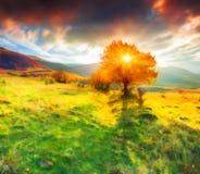 Einsamer Herbstbaum gegen drastischen Himmel in den Bergen Stockfotos