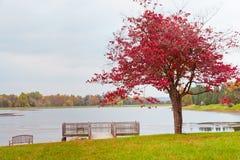 Einsamer Herbstbaum nahe See am bewölkten Tag Stockfoto