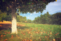 Einsamer Herbstbaum Romantischer Autumn Landscape Funkeln beleuchtet Hintergrund Stockfotos