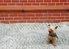 Einsamer Hund Stockbild