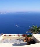 Einsamer Hund Stockfotos