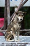 Einsamer Hund Stockbilder