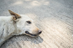 Einsamer Hund Stockfotografie