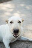 Einsamer Hund Lizenzfreie Stockfotos