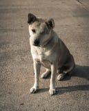 Einsamer Hund auf den Straßen Stockfoto