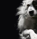 Einsamer Hund auf einem dunklen Hintergrund stockfoto