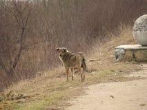 Einsamer Hund in einem schmutzigen Platz Lizenzfreie Stockfotografie