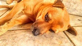 Einsamer Hund nach Spaß suchen lizenzfreies stockfoto