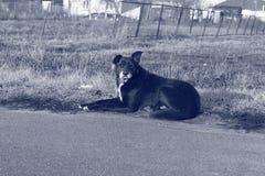 Einsamer Hund Schwarz- weißes Foto Lizenzfreies Stockfoto
