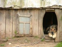 Einsamer Hund in seiner Hundehütte Lizenzfreies Stockfoto