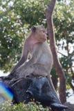 Einsamer junger Affe Stockfotos