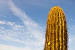 Einsamer Kaktus Stockfoto