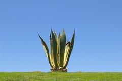 Einsamer Kaktus Lizenzfreie Stockbilder