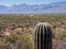 Einsamer Kaktus Stockbild