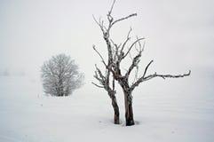 Einsamer, kalter Baum. lizenzfreie stockfotografie