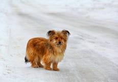 Einsamer kleiner Hund auf einer Snowy-Straße Stockbilder