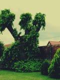 Einsamer magischer Baum Stockbilder