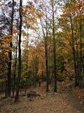 Einsamer Mann, der entlang Forest Trail geht lizenzfreie stockbilder