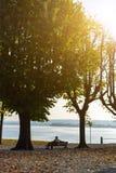 Einsamer Mann, der zwischen zwei Bäumen auf einer Bank sitzt und den See betrachtet Lizenzfreie Stockfotos