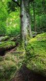 Einsamer Nadelbaum im mountain& x27; s-Wald Lizenzfreie Stockfotos
