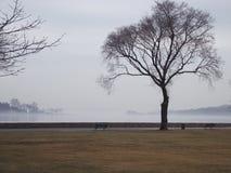 Einsamer Nebel über See stockfoto