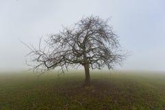 Einsamer Obstbaum im Winter im Nebel, der auf Wiese steht Lizenzfreies Stockbild