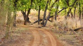 Einsamer Pfad im Dschungel lizenzfreies stockfoto