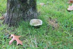 Einsamer Pilz Stockbilder