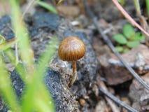 Einsamer Pilz, der in den Rückständen groing ist lizenzfreies stockbild