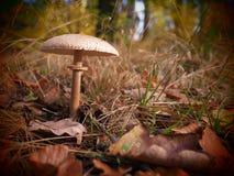 Einsamer Pilz in einem wilden und romantischen forrest stockfoto
