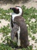 Einsamer Pinguin stockbild
